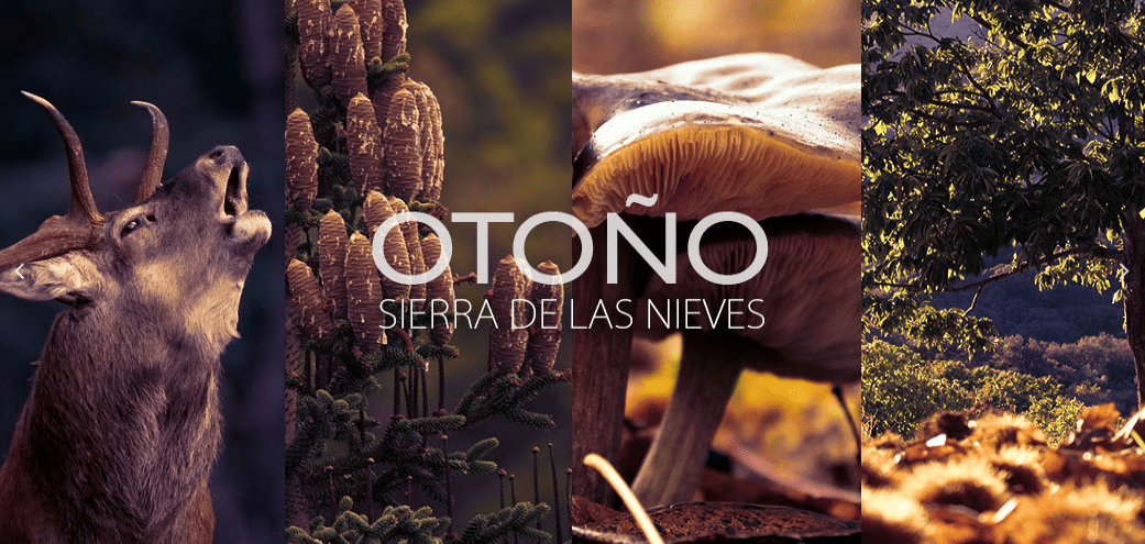 When autumn arrives at the Sierra de las Nieves