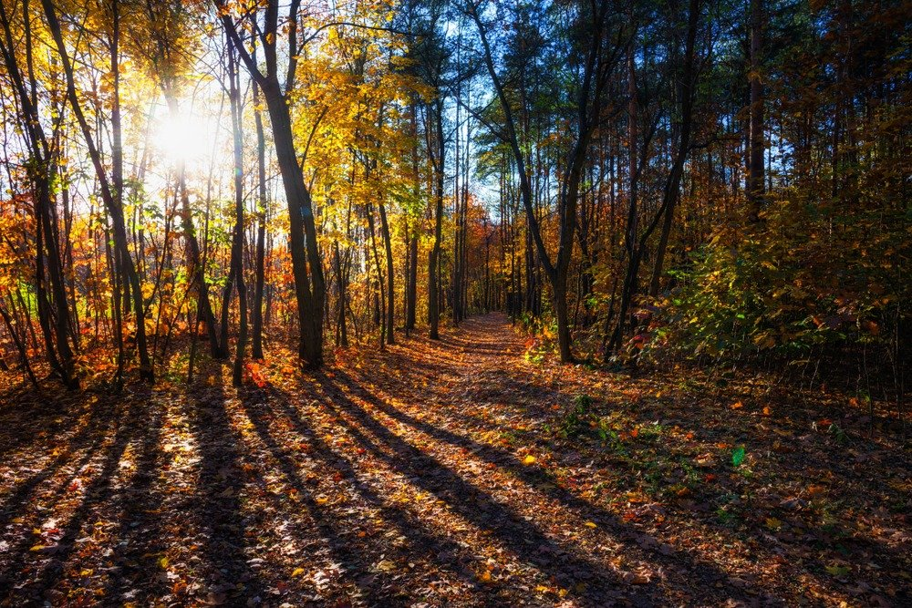 How being in nature can boost your mental and physical health