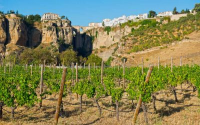 Bodegas worth experiencing in Andalucía